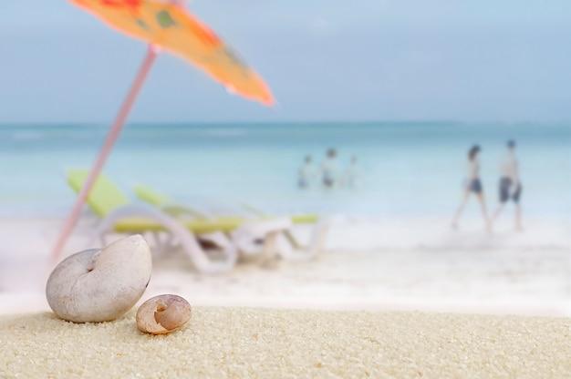 Muscheln im sand mit entspannendem strand.