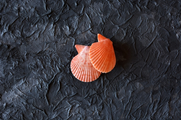 Muscheln in allen farben auf dunklem stein