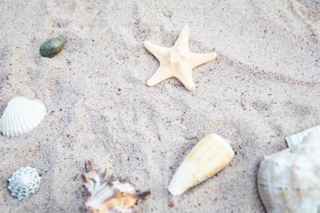 Muscheln in verschiedenen formen und seesterne auf dem meeressand am strand.