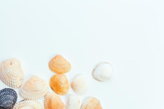 Muscheln isoliert
