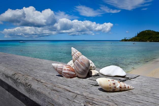 Muscheln liegen am strand mit himmelhintergrund