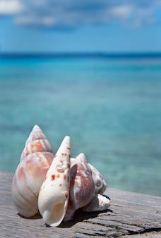 Muscheln liegen auf dem holzbrett am strand mit hellem himmel und blauem meereshintergrund