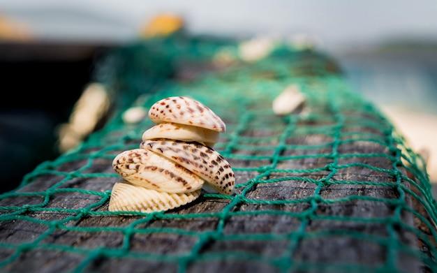 Muscheln mit fischernetz meer