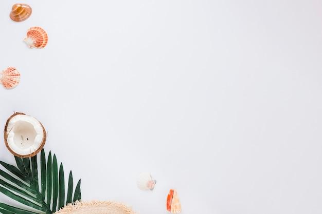 Muscheln mit grünem blatt und kokosnuss