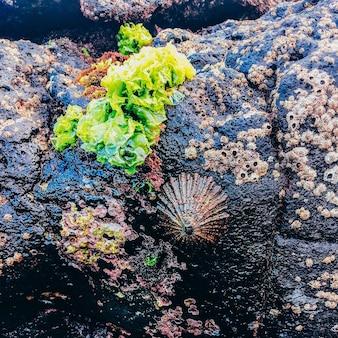 Muscheln natur hintergrund. bio-oceanvibes
