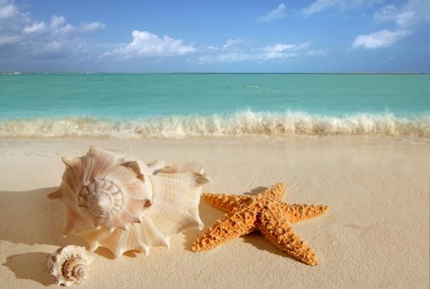 Muscheln seestern tropischen sand türkis karibik