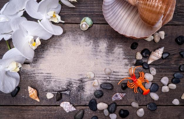 Muscheln, sichere unterbringung für meereslebewesen