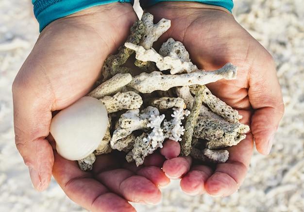Muscheln und korallen in den händen gründen sich nach ebbe auf einem sandstreifen.