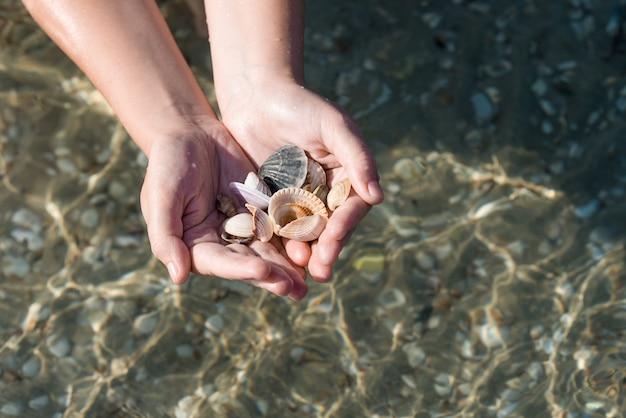 Muscheln und sand