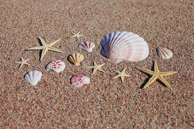 Muscheln und seesterne am strand. sommerferienkonzept. urlaub meer