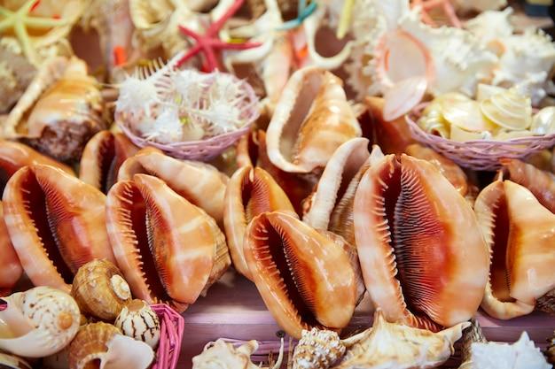 Muscheln und strandandenken