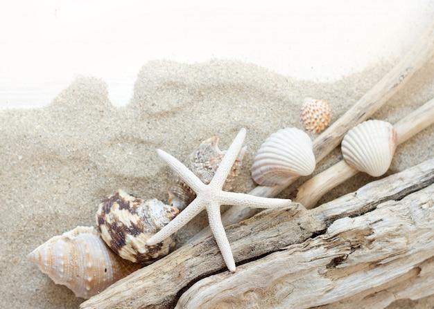 Muscheln, wälder und seesterne auf gewelltem sand draufsicht mit kopierraum
