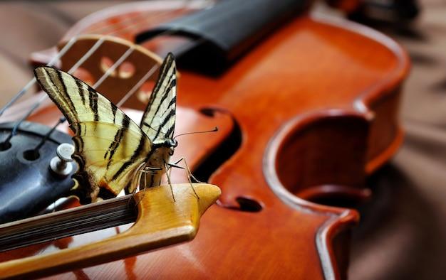 Musikalisches konzept. geige und schmetterling. schmetterling am bug.
