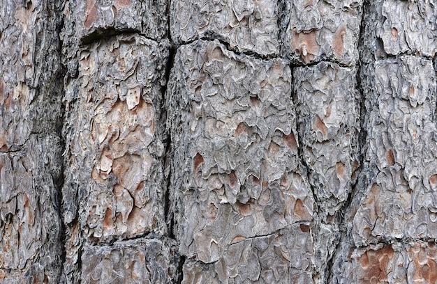 Muster der natürlichen rindenstruktur