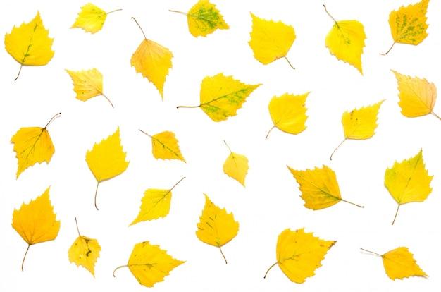 Muster des gelben herbstlaubs lokalisiert auf weiß