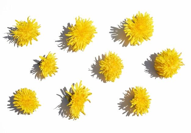 Muster des verschiedenen gelben löwenzahns auf einem weißen isolierten hintergrund