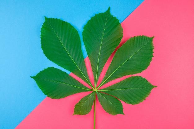 Muster mit frischen grünen kastanienblättern