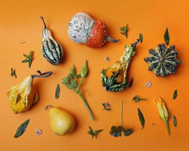 Muster von einer vielzahl von dekorativen kürbissen von grünen blättern und blumen auf einem orange hintergrund flache lag