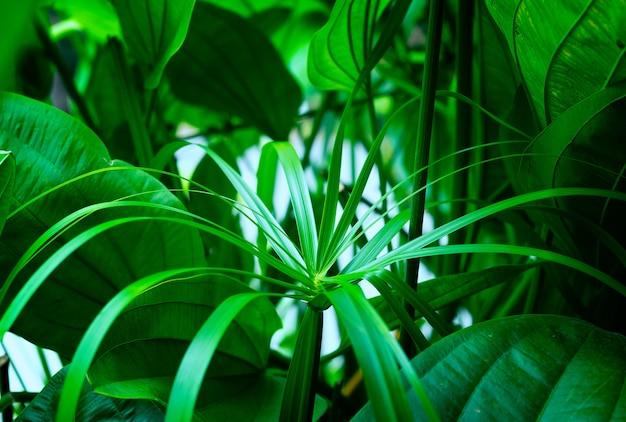 Muster von tropischen blattgrünblättern. naturkonzept, natürlicher hintergrund, grüne blätter