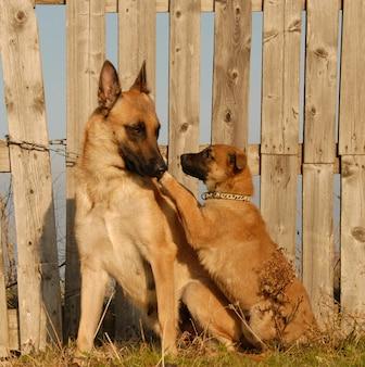 Mutter hund und welpe