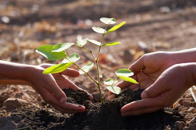 Mutter und kinder helfen, jungen baum zu pflanzen. konzept grüne welt