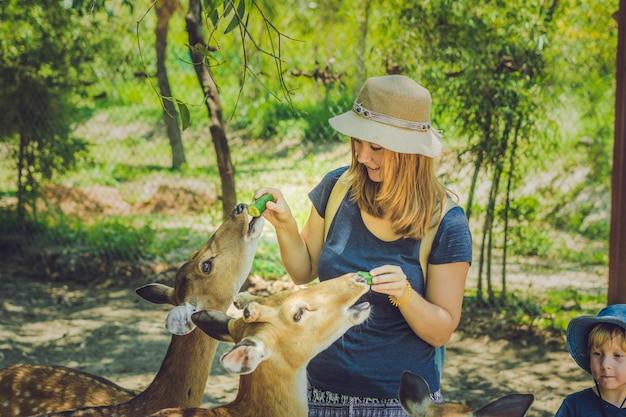 Mutter und sohn füttern schöne hirsche von den händen in einem tropischen zoo