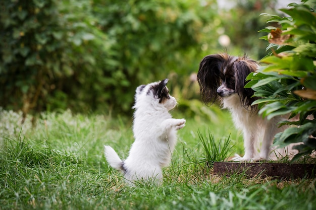 Mutterhund, der mit einem jungen spielt