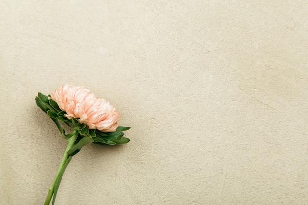 Muttertageshintergrund mit asterblumenhintergrund
