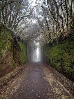 Mysteriöser tunnel von moosigen felsen und von bäumen in einem wald