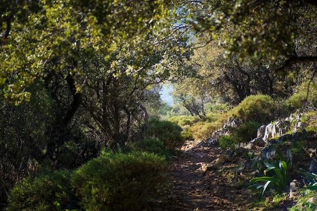 Mysteriöser und fabelhafter pfad zwischen bäumen auf dem lykischen weg in der türkei