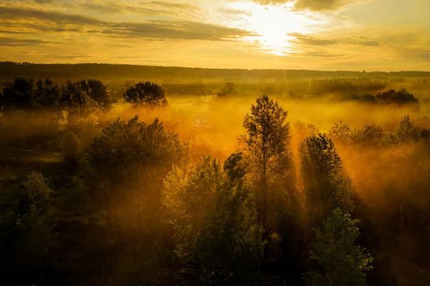 Mystisch bezaubernder orangefarbener nebel zwischen den dunklen silhouetten von bäumen. am frühen morgen zwischen den bäumen mit starkem gelbem licht und nebel.