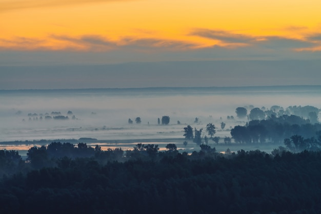 Mystische ansicht über wald unter dunst am frühen morgen
