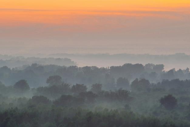 Mystische ansicht von oben auf wald unter dunst am frühen morgen. nebel zwischen schichten von baumsilhouetten in der taiga unter dem himmel vor dem morgengrauen.