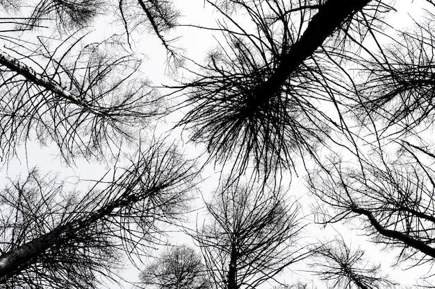 Mystische dunkle bäume von unten gesehen
