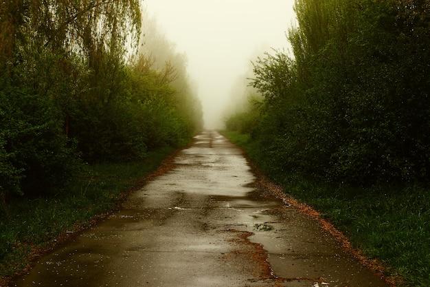 Mystische straße im nebel im sommer