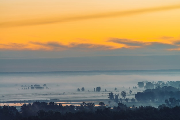 Mystischer blick auf wald unter dunst am frühen morgen. nebel unter baumsilhouetten unter dem himmel vor dem morgengrauen. goldlichtreflexion im wasser. ruhige atmosphärische minimalistische landschaft von majestätischer natur am morgen.