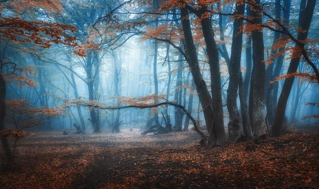 Mystischer dunkler herbstwald mit spur im blauen nebel. landschaft mit verzauberten bäumen mit orangefarbenen blättern auf den zweigen.