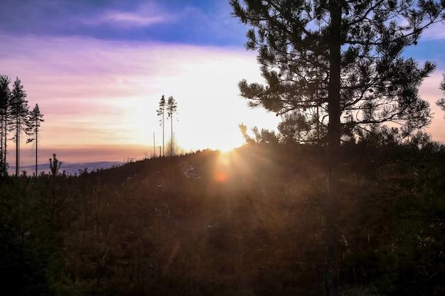 Mystischer skandinavischer winterwald bei sonnenuntergang in karelien. großansicht bildlandschaft mit bäumen, blauer himmel mit wolken, herrliche aussicht. hintergrund des saisonalen finnland-winters. platz kopieren