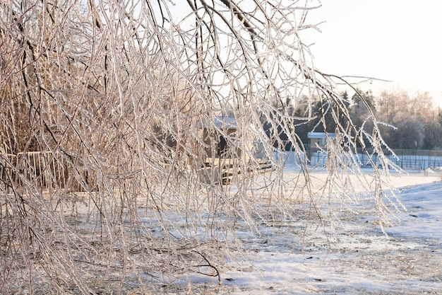 Nach einem eisigen regen sind bäume und pflanzen mit einer eiskruste bedeckt. rote beere im transparenten eis.