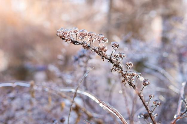Nach einem eisigen regen sind die bäume mit einer eiskruste bedeckt. pflanzen in transparentem eis.