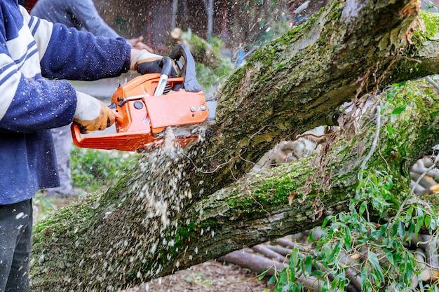 Nach einem hurrikan beschädigte ein sturm bäume mit professionellen stadtwerken, die einen baum in der stadt fällen