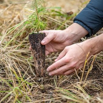Nach verheerender flamme und dürre junge bäume im wald pflanzen