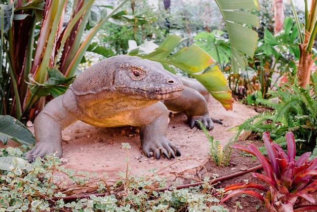 Nachbildung des lebensgroßen komodo-drachen-reptils.