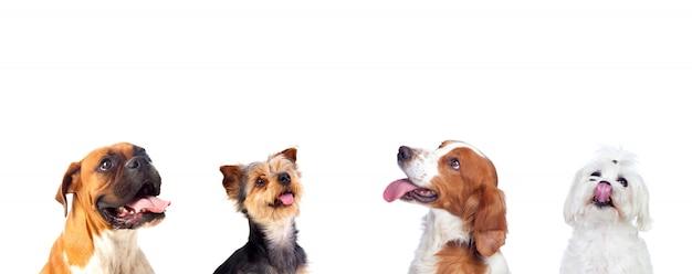 Nachdenkliche hunde, die oben schauen
