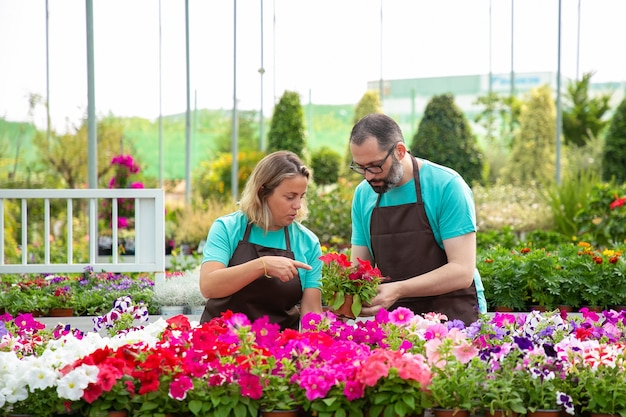Nachdenkliche professionelle gärtner diskutieren über blühende pflanzen und stehen