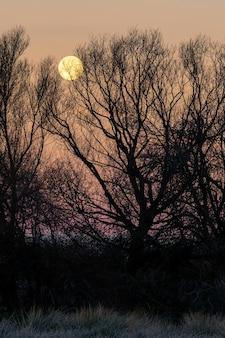 Nachtlandschaft bei sonnenuntergang mit silhouette von hohen bäumen und einem großen vollmond im goldenen himmel, gefrorener boden von der kälte des winters. spanien.