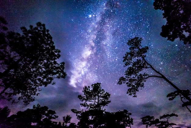 Nachtlandschaft mit bunter milchstraße