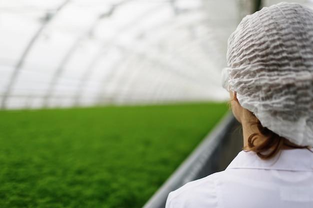 Nachwuchswissenschaftler erforschen pflanzen und krankheiten in einem gewächshaus mit petersilie