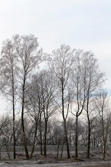 Nackte laubbäume in der wintersaison, landschaft