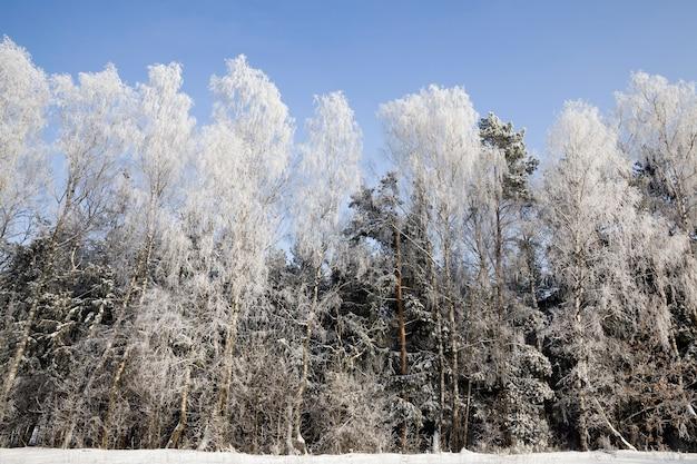 Nadel- und laubbäume im winter